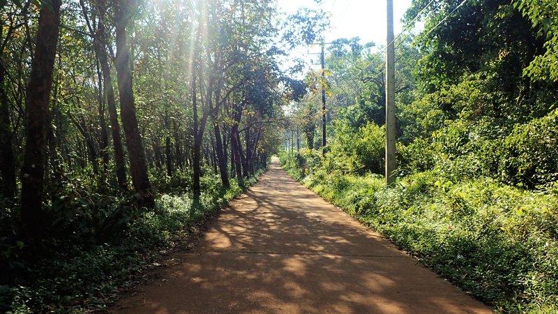 Koh Mak tree lined road