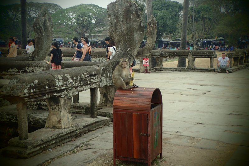 Cheeky Monkey at Angkor Wat