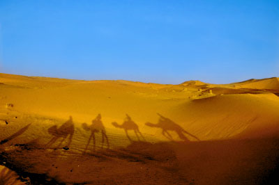 Camel shadows on desert