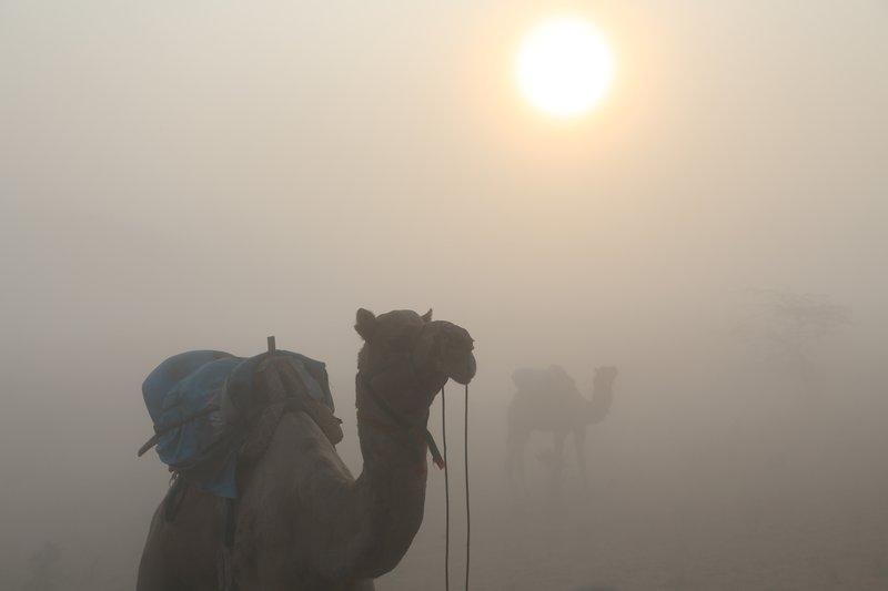 Sunrise & Camel, India