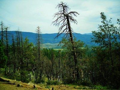 25-Yosemite_N_P_.jpg