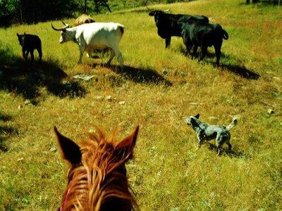 28-Cattle_Drive.jpg