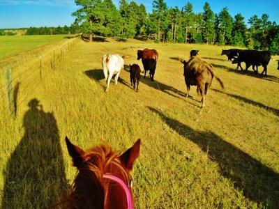 30-Cattle_Drive.jpg