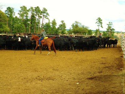 38-Working_the_cattle.jpg