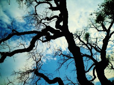 49-Brandh_rjad_skog.jpg