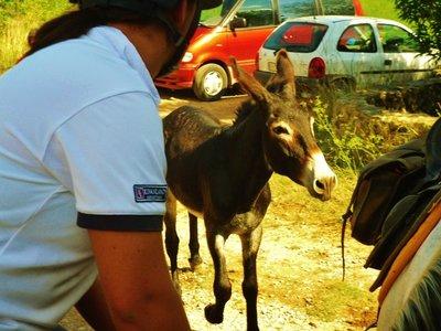 64-Maaren_..ller_Donkey.jpg