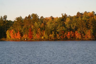 Fall colours ablaze in the boreal forest
