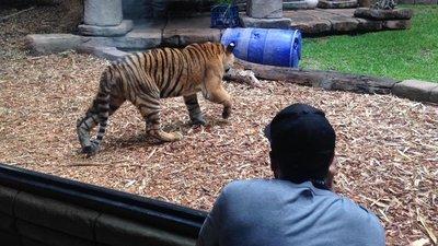 Oz_zoo.jpg
