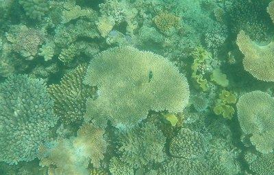 Reef_express_nemo.jpg