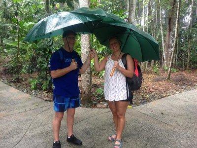 rainforest6.jpg