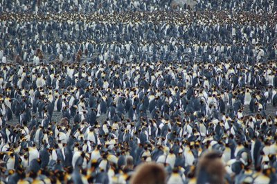 Penguins Everywhere!