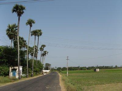 Country roads, Tamil Nadu India