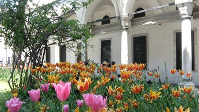 Tulips at the Topkapi