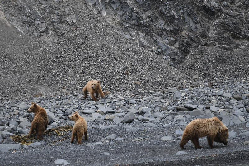 large_Bears1.jpg