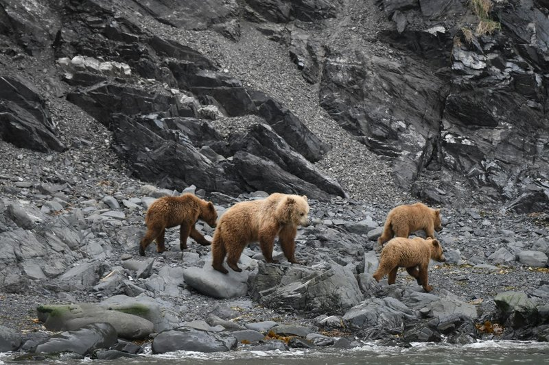 large_Bears2.jpg