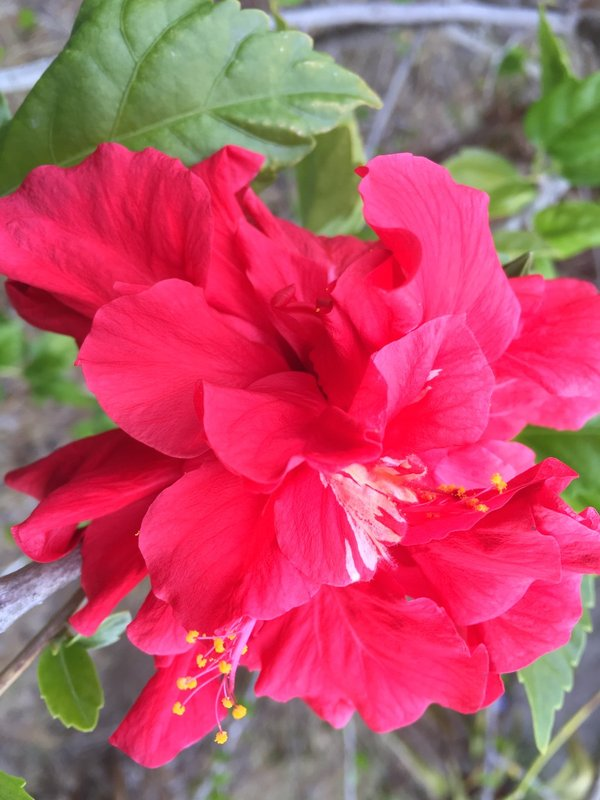 large_Flower.jpg