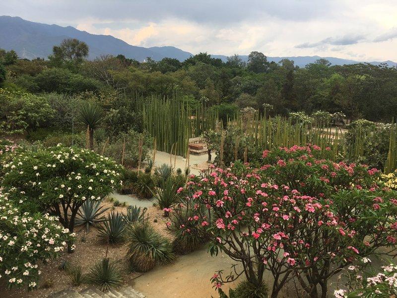 large_Oaxaca_-_Flowers.jpg