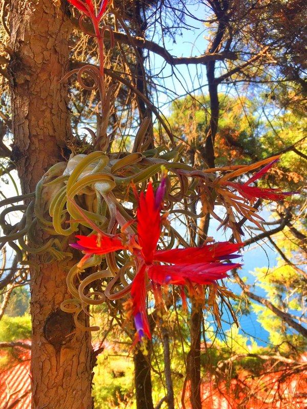 large_Red_Flower..ake_Atitlan.jpg