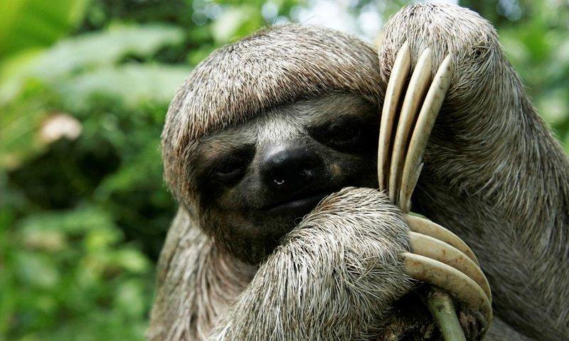 large_sloth.jpg