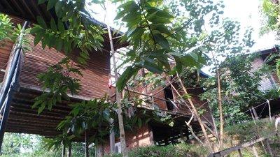 Paganakan Dii Tropical Resort Sandakan