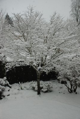 1_the_snow..ncouver.jpg