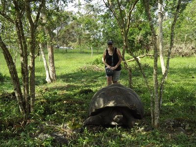 Land tortoise.  Live to over 100
