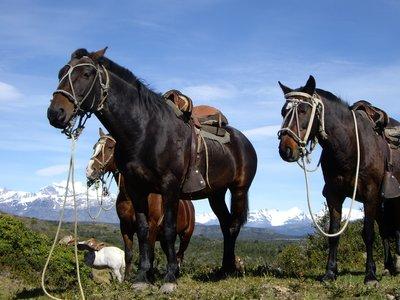 Horses in Torres