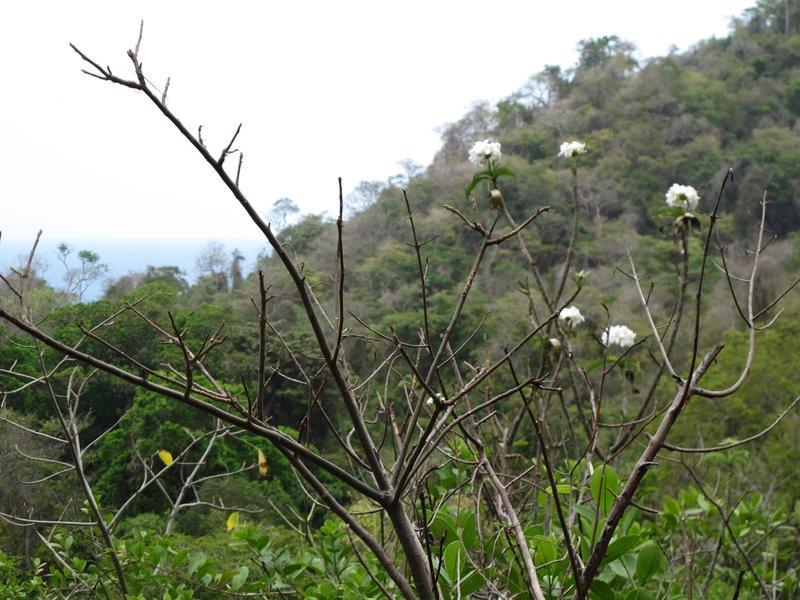 Uphill view