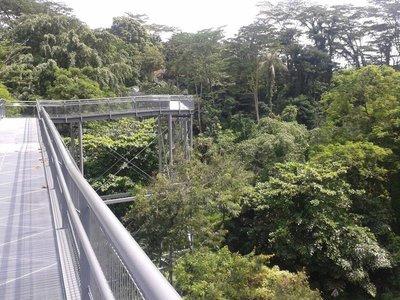 Canopy Walk - Southern ridges