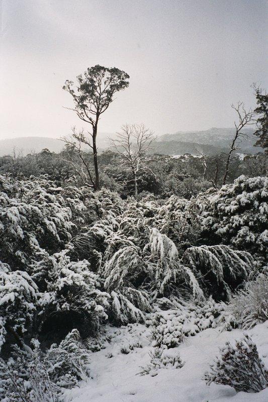 Moina, Tasmania