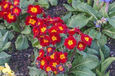 Botanical_.._Fountain-6.jpg