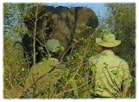 Pungwe Bush Walk
