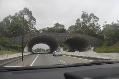Nature bridge built for Koalas and other native animals to cross