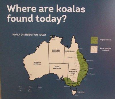 Where to find koalas in Australia today
