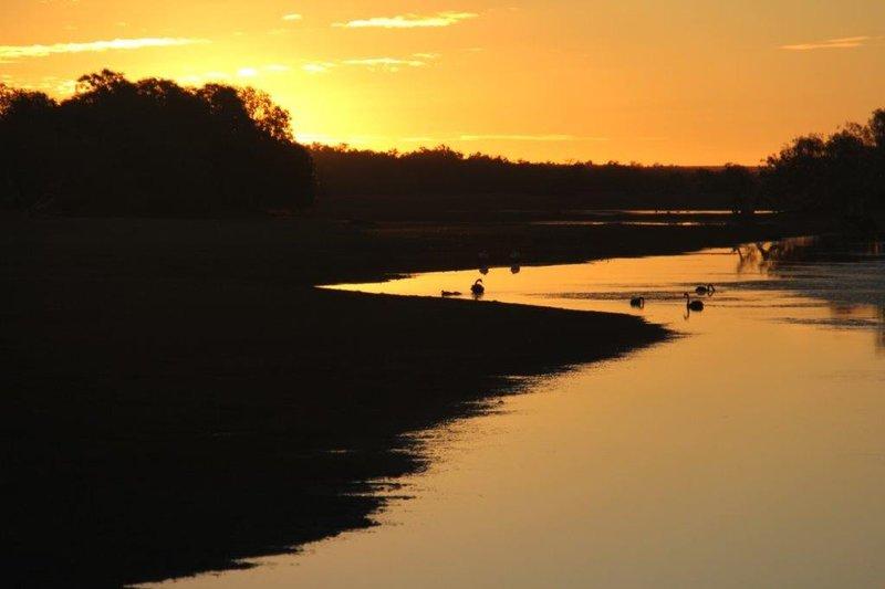 Black swans at sunset
