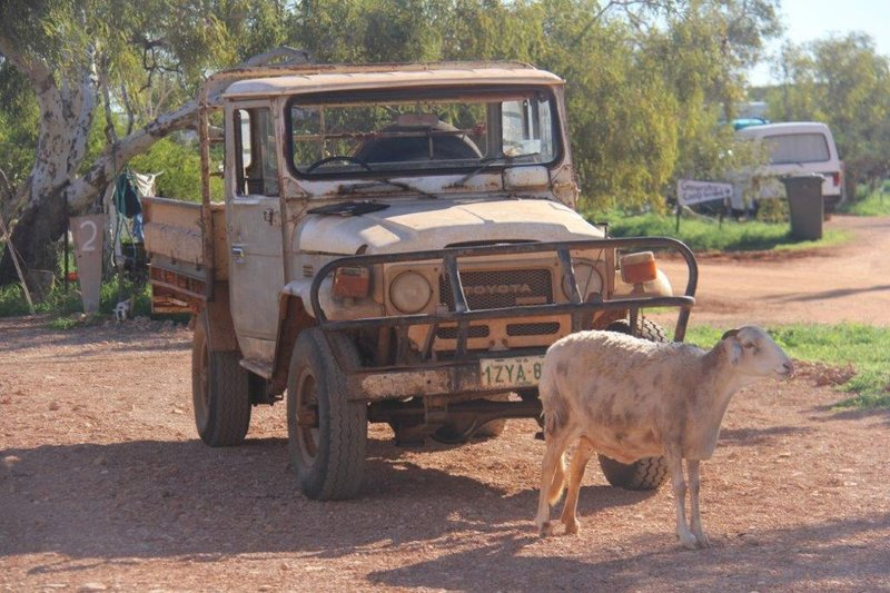 Brownie and  the 250k km Landcruiser at the station