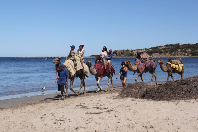 Camel rides at Causeway with Granite Isle at the back