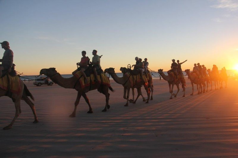 Camels ar Cable Beach sunset