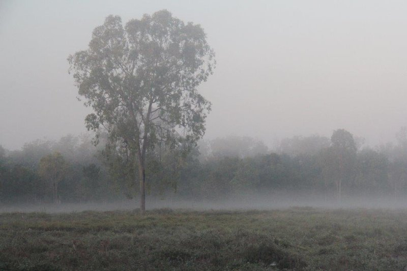 Can you see the wallabies in the mist