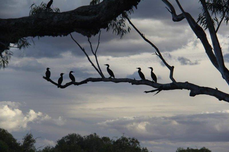 Cormorants drying at sunset