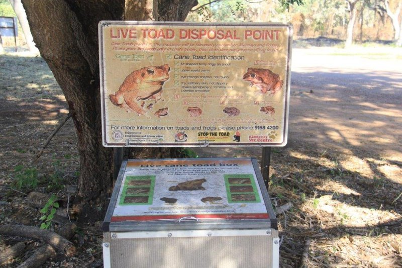 Drop off cane toads for humane disposal