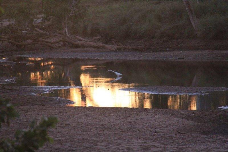 Egret hunting at sunset