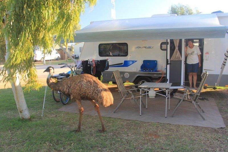 Emu visiting us in caravan park