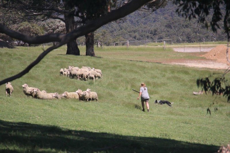Farmer, her dog and the sheep