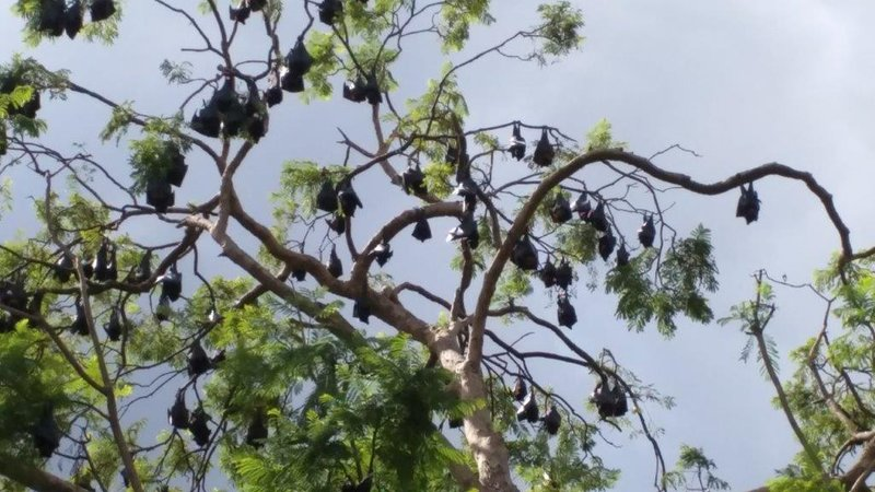 Flying foxes at Kilcoy made us pass free camp