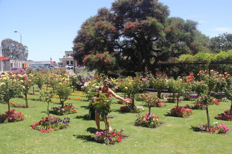Gardens in the CBD of Mt Gambier