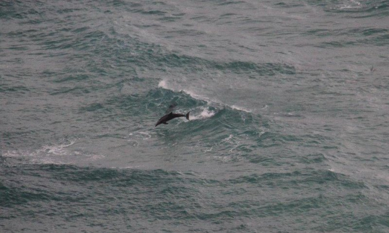 Happy Dolphins at the most easterly point