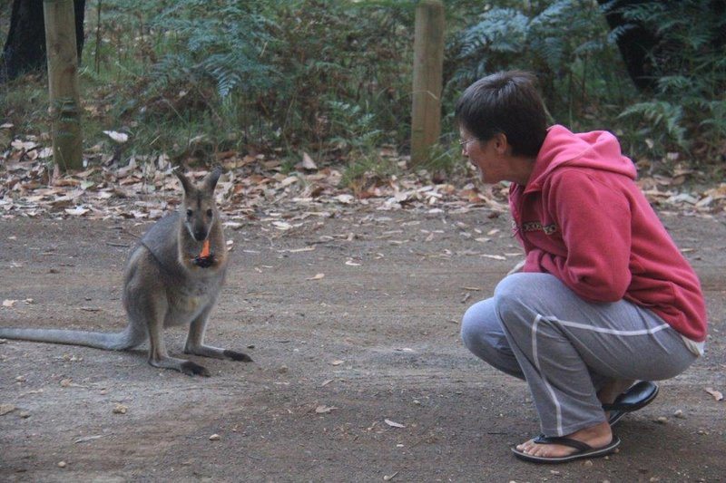Hello to a local Wallaby