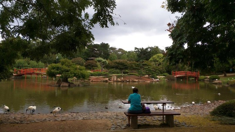 Japanese Garden at Southern Queensland Uni Picnic