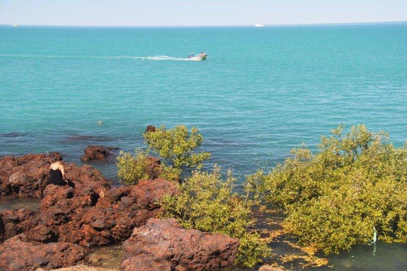Mangrove trees live in sea water
